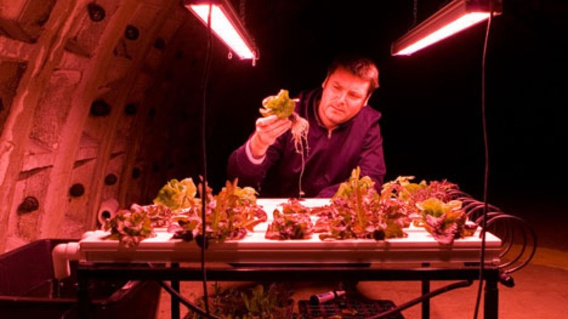 Food for the future: London's underground farm