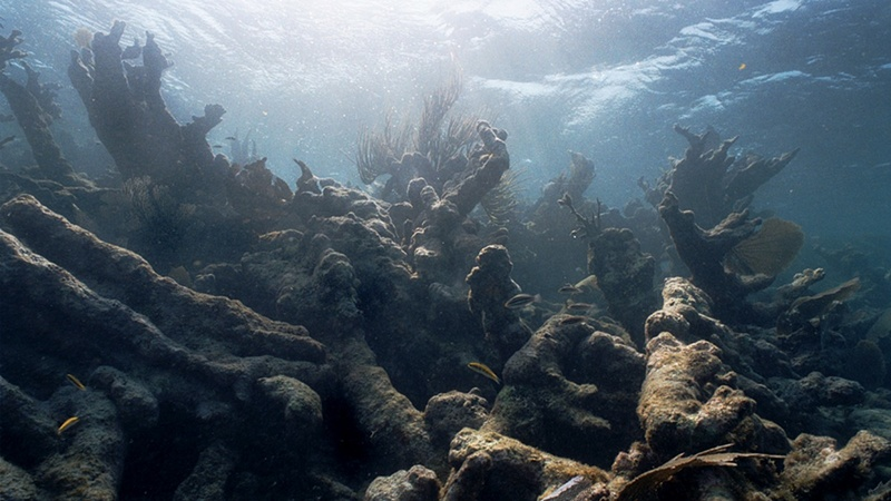 Bleaching kills swathes of Great Barrier Reef