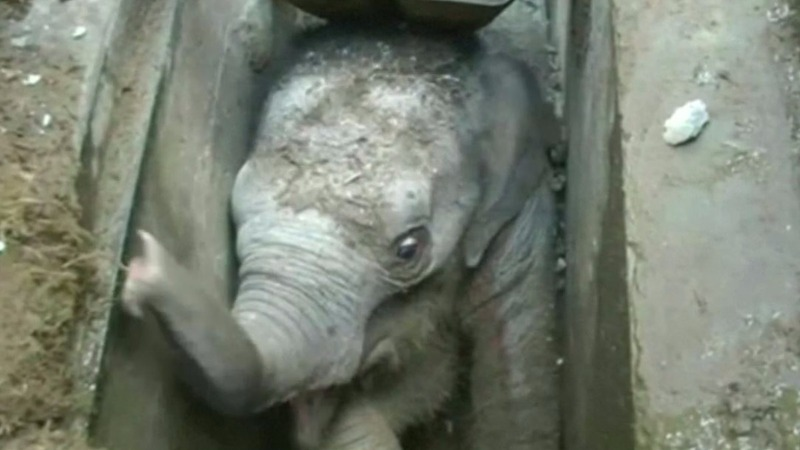 INSIGHT: Baby elephant rescued in Sri Lanka