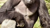 Decision to shoot gorilla the right one -zoo director