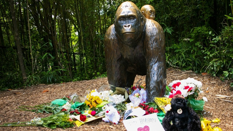 Boy who fell into gorilla area 'doing well'