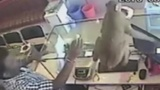 Cheeky monkey robs jewellery shop