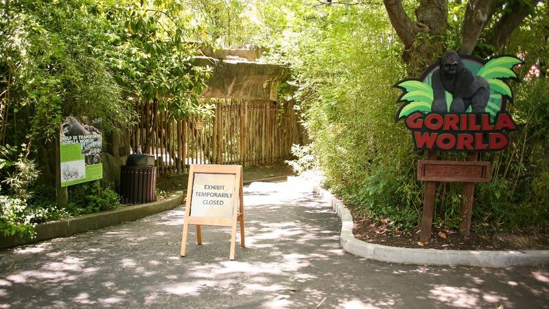 Zoo reopens exhibit where gorilla was shot