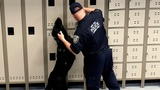 Biggest canine training facility opens in New York