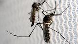 VERBATIM: Zika risk 'very low' at Rio – WHO