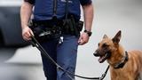 Belgian anti-terror police arrest 12 people