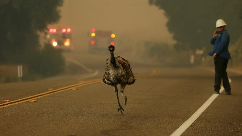 Firefighters struggle to extinguish Southwest wildfires