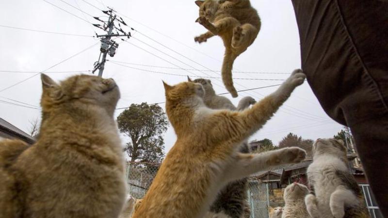 Cute to creepy: Asia's animal kingdom