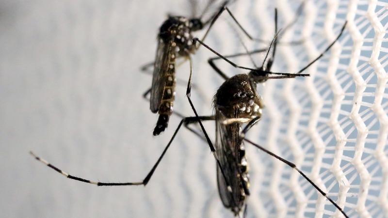 Zika vaccines 100% effective in mice