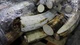 Tanzania's fight to end 'white gold' killings