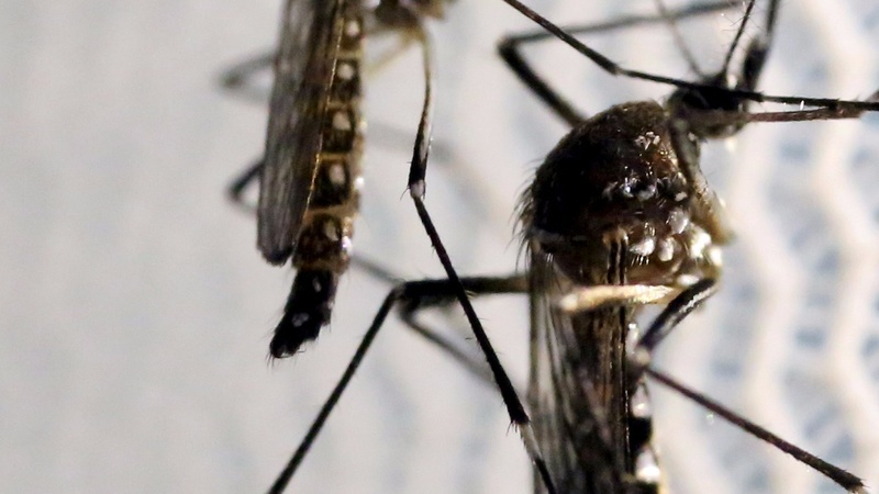 A mystery Zika transmission case in Utah