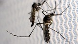 First locally transmitted cases of Zika in U.S.