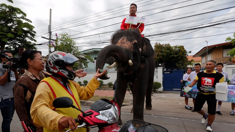 INSIGHT: Thai elephants on the campaign trail