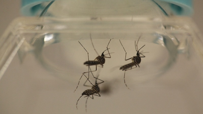 Chinese breakthrough could help stamp out Zika