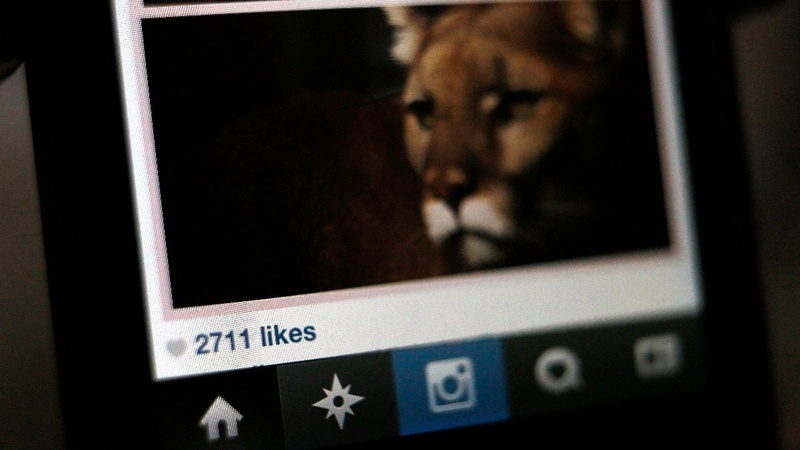 Instagram's imitation innovation
