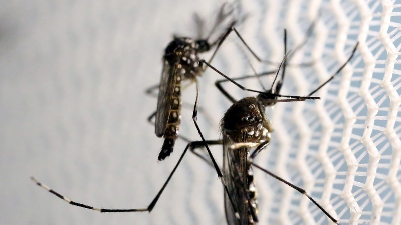Zika tied to Texas baby's death