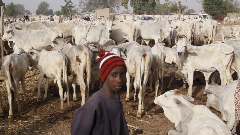 Farmland clashes in Nigeria fuel sectarian tension