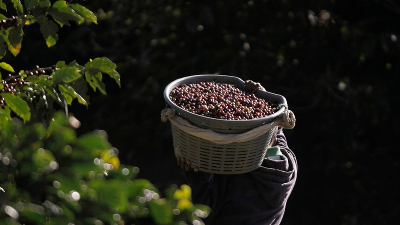 Costa Rica breaks low-grade coffee taboo