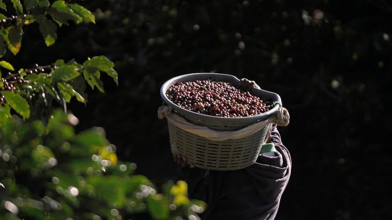 Costa Rica breaks low-grade coffee taboo