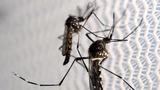 Zika takes a toll on Florida tourism