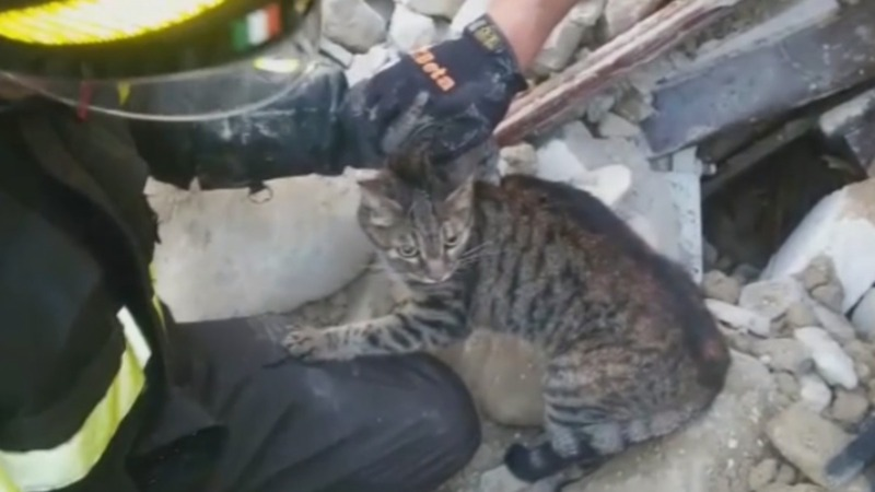 INSIGHT: Cat rescued 16 days after earthquake