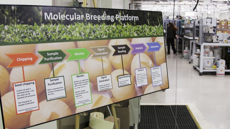 Big seed money: Bayer scoops up Monsanto for $66 bln