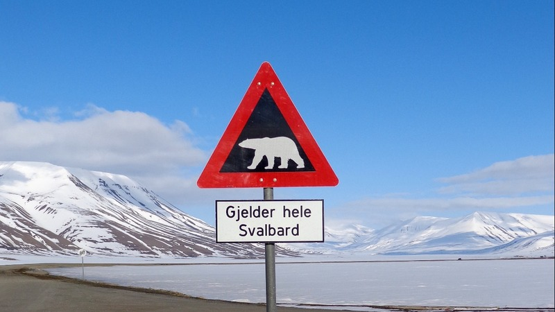 Polar bear deaths increase in Norway's Arctic
