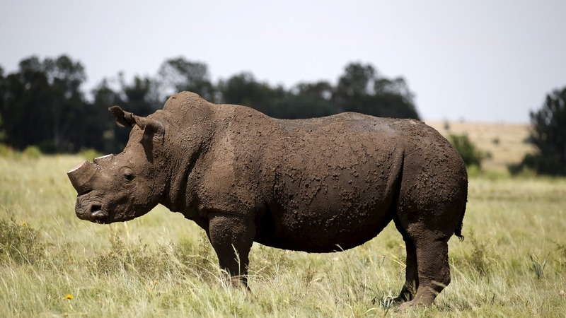Endangered animals in the hands of the U.N.