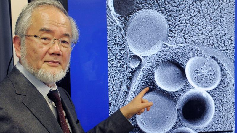 Japanese biologist wins Nobel medicine prize