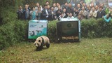 INSIGHT: China releases pandas into the wild