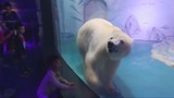 Activists: Free the 'world's saddest polar bear'
