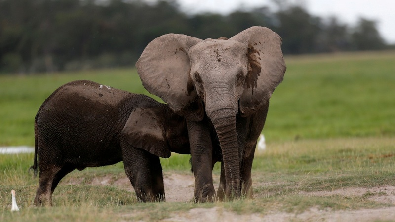 Wildlife down nearly 60 percent since 1970