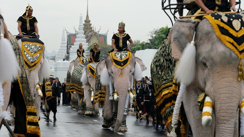 INSIGHT: Thai elephants pay respects to late king