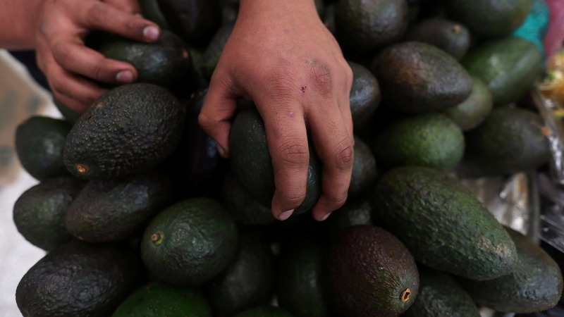 Mexico's avocado industry could rot if NAFTA goes