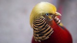 INSIGHT: 'Trump bird' shows off its presidential plumage