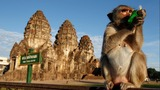 Thailand's annual buffet feast fit for monkeys