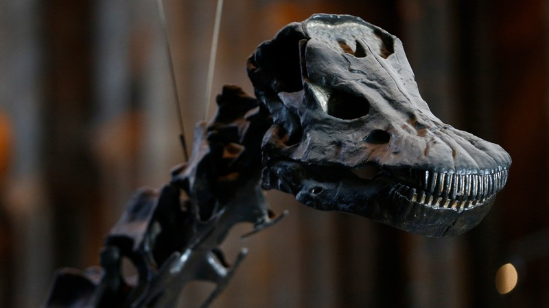 Last day on display for Dippy the Dinosaur