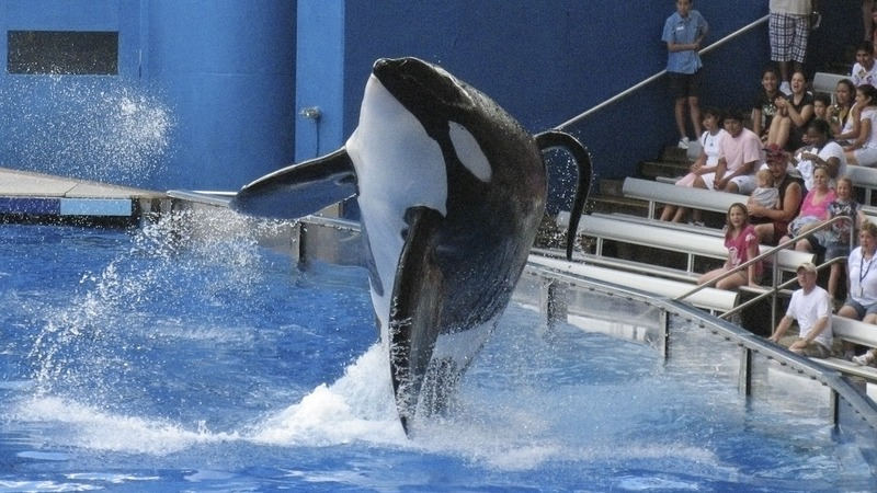 Sea World killer whale and 'Blackfish' star dies