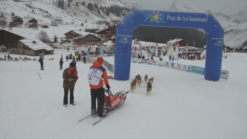 INSIGHT: Frenchman leads dog sled challenge
