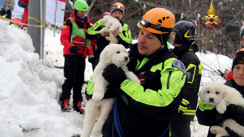 Puppies found alive in Italy avalanche rubble