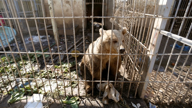 Animals starve to death in Mosul's ruined zoo