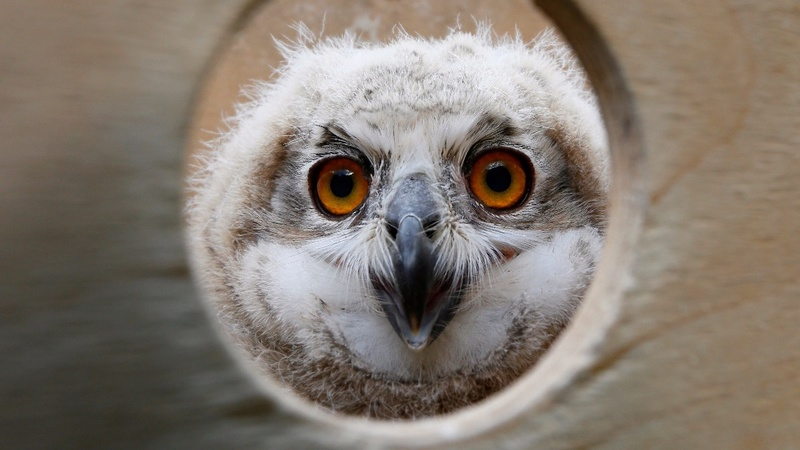 Animal activists take aim at Japan's owl cafes