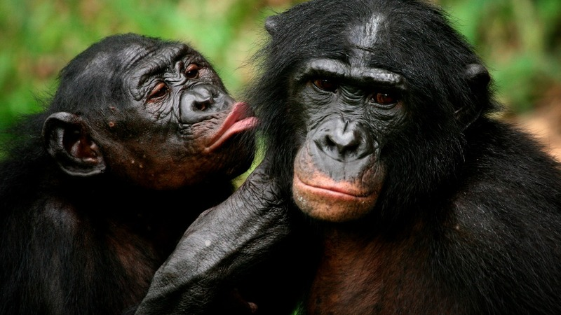 Most primate species at risk of extinction -report
