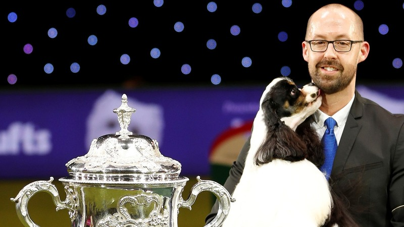 INSIGHT: Miami the Spaniel crowned Best in Show