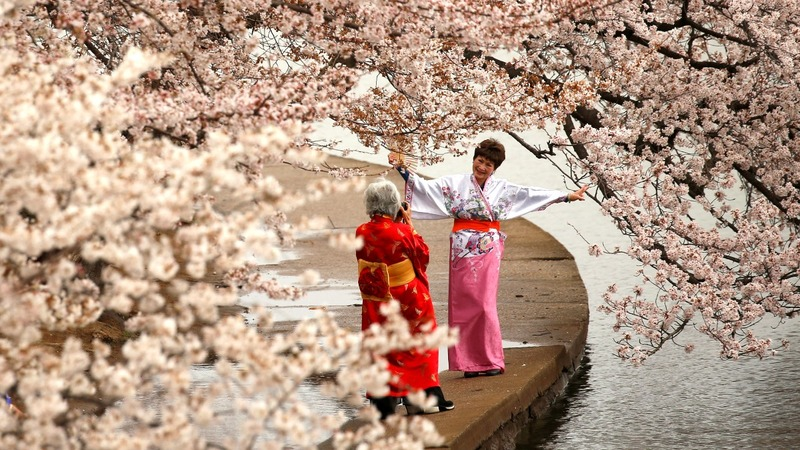 In Pictures: Tourism blossoms for blooms