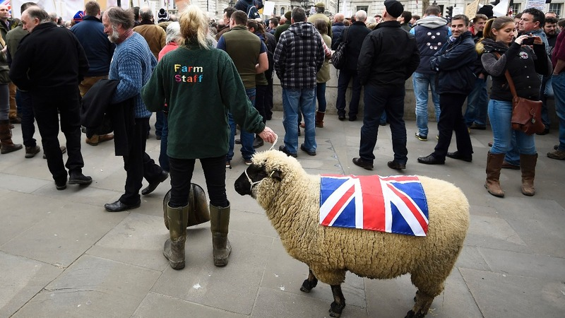 Leaving EU flock rattles many UK farmers