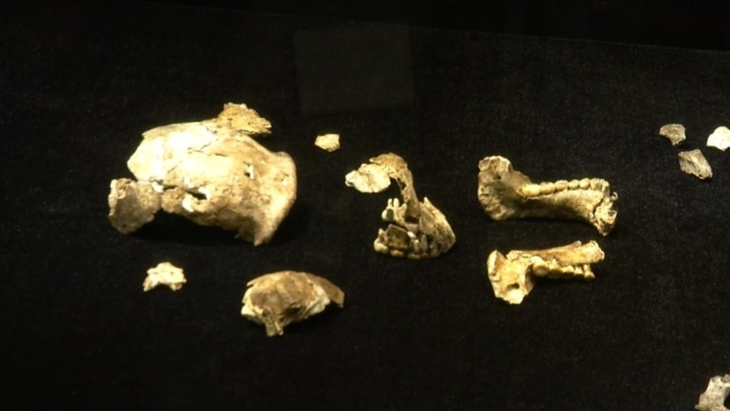 Largest display of hominin fossils opens