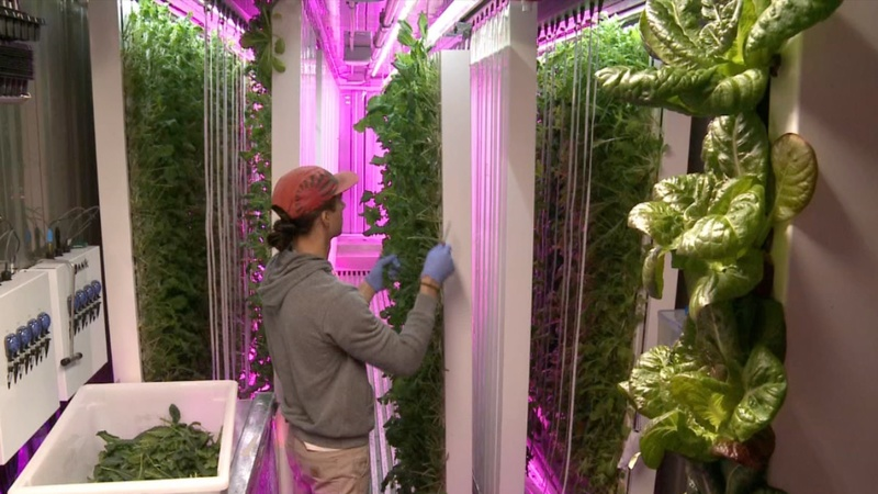 City farming startup aims to feed an urban world