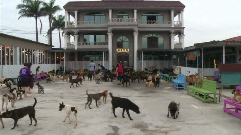 INSIGHT: Disabled dogs roll out in Taiwan