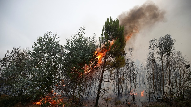 Portugal's deadliest fire still rages, 62 dead